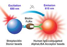 Assay principle for AlphaLISA Fc-receptor binding assay