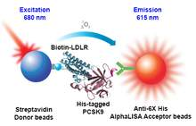 Assay principle for the AlphaLISA PCSK9/LDLR binding kit