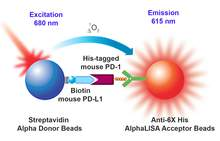 Assay principle for AlphaLISA mouse PD-1/PD-L1 binding assay