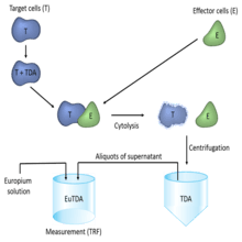 Assay schematic for DELFIA EuTDA assay