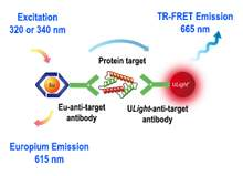 Assay schematic for LANCE <em>Ultra</em> TR-FRET cellular detection assay