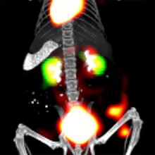 Multimodality imaging PET, microCT, FLIT, using VivoQuant