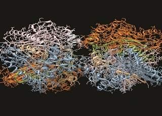 Protein Antibody