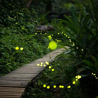 FireFlies Cytotoxicity and Cell Proliferation
