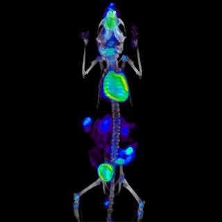 G8_PET-CT-Imaging-Mouse-Web.jpg