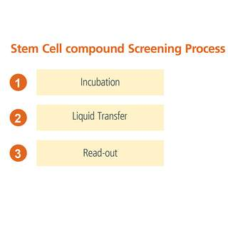 Stem cell compound screening process