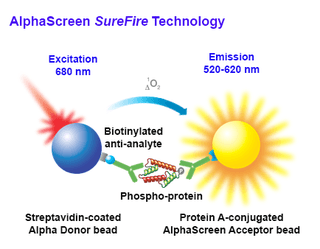 AlphaScreen SureFire assay principle