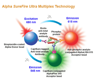 Alpha SureFire Multiplex assay principle
