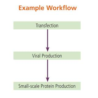 cell culture and viral amplification workflow