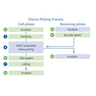Cherry picking process
