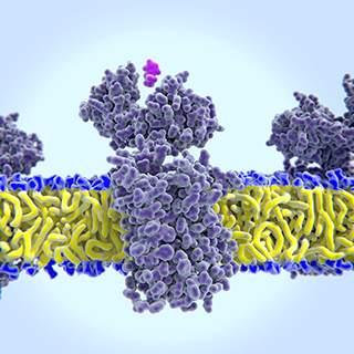 Cells expressing GPCRs