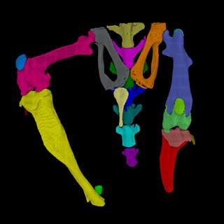 microCT_Imaging_BoneApplications_Web.jpg