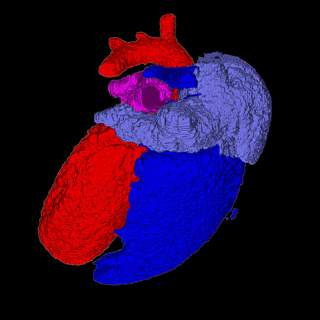 Segmented Heart Image using Quantum GX microCT Imaging System