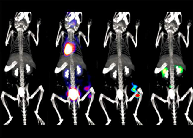 Multimodality Imaging - Optical, PET and microCT