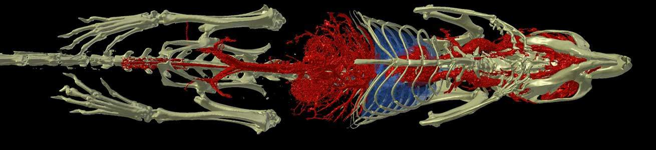 MicroCT imaging of mouse bone, vascular and lungs using the Quantum GX2