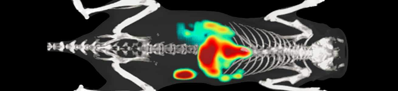 Multimodality imaging – optical imaging with microCT overlay