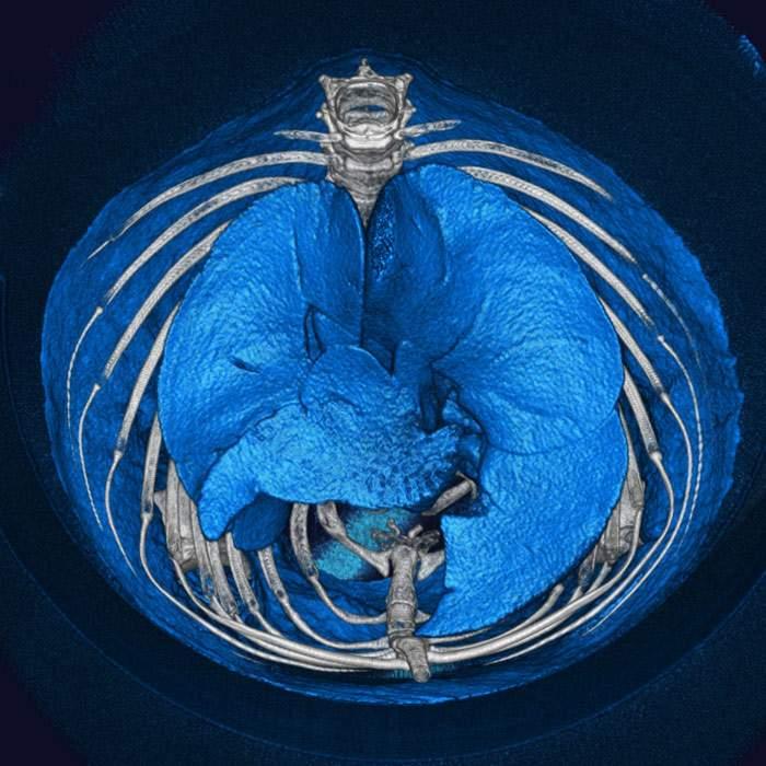 Quantum Gx2 Microct Imaging System Perkinelmer